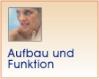 Aufbau & Funktion der gesunden/erkrankten Haut